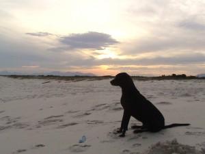 Cachorro-Surfista-01