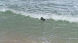 Cachorro-Surfista-02