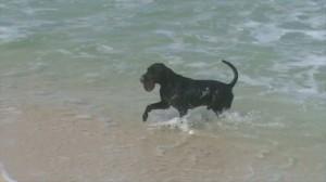 Cachorro-Surfista-05