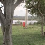Limpeza-Lagoa-Jacarepia-Vilatur-Saquarema(13)