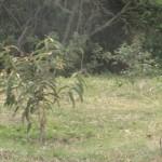 Limpeza-Lagoa-Jacarepia-Vilatur-Saquarema(14)