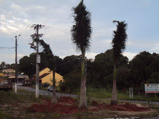 Palmeira-Imperial-Vilatur-Saquarema (34)