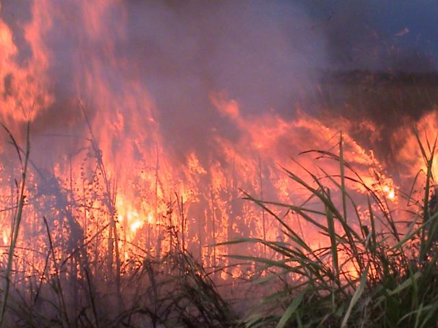 Incendio-brejo-Lagoa-Jacarepia-Vilatur-Saquarema(7)